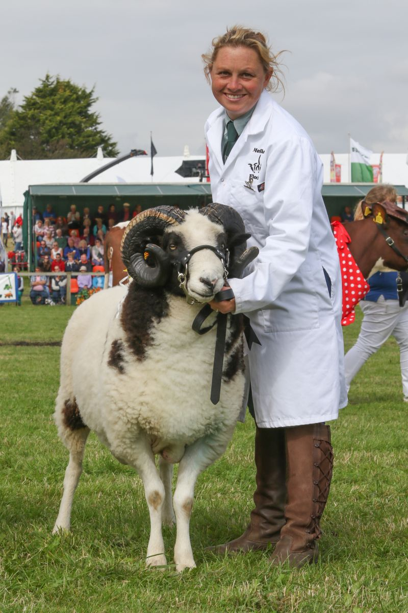 Livestock and horse entries on the rise at Dorset County Show