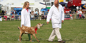 Show schedules and online booking for Dorset County Show 2015